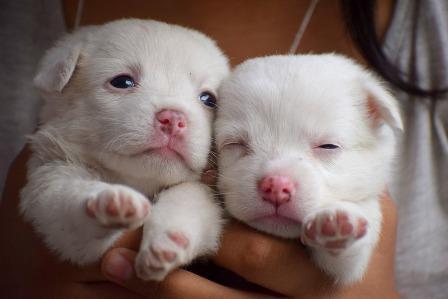 Narcao Trovati Dentro Un Sacco Sette Cuccioli Di Cane Cinque Forse